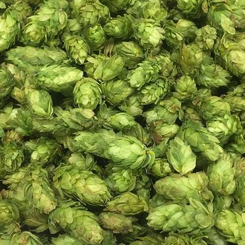 Dried Hops After
