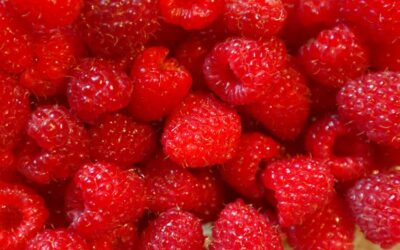 Canada and B.C. help fruit industry make waves